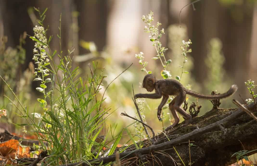 Hundredth Monkey Effect: How Marketing Can Change Behavior